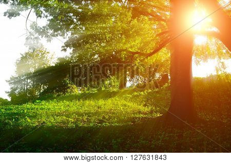 Sunrise landscape in the forest with bright sunbeams breaking through the tree branches. Summer forest landscape