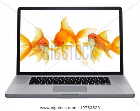 Laptop isolated on white background. Gold fish