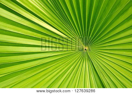 Palm leaves background - high resolution image