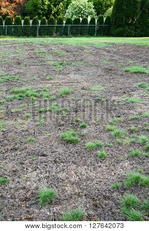 Pests and disease cause a large amount of damage to lawns