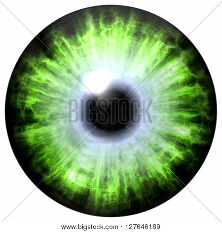 Isolated big green eye. Illustration of green blue stripped eye iris light reflection