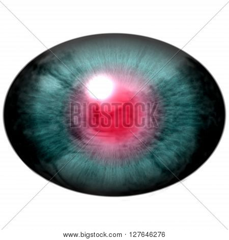 Blue Animal Eye With Open Pupil And Bright Red Retina In Background. Colorful Iris Around Pupil,eye