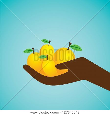 fresh mangoes hold in hand design vector