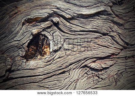 knot on real oak wood artistic nature ( texture Quercus robur )