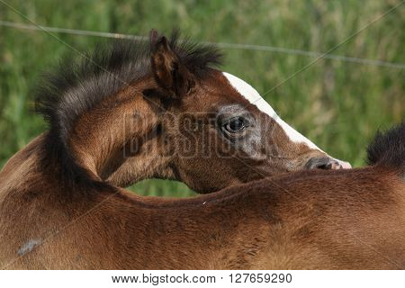 Amazing brown foal hiding alone on pasturage