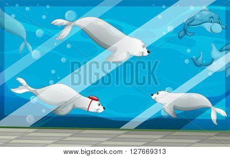 Seals and dolphins swimming in aquarium illustration