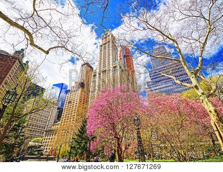 Trees Blossom In City Hall Park Of Lower Manhattan