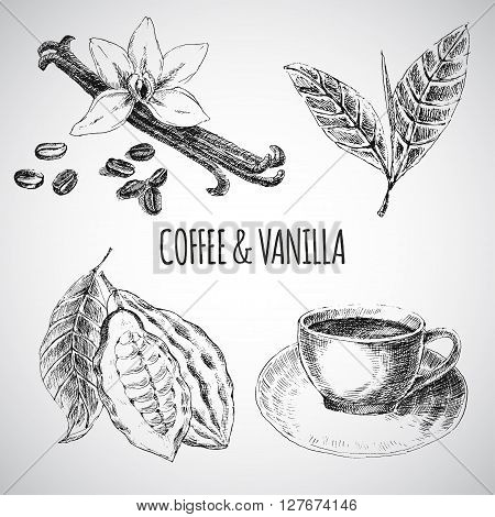 Vector hand drawn set with dessert spices. Vintage illustration. Retro collections with vanilla, cocoa beans, coffee beans, coffee leaves, cup of hot drink