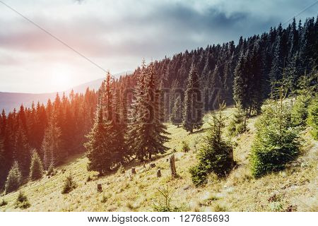 Great view of the valley which glowing by sunlight. Dramatic scene and picturesque picture. Location place Carpathian, Ukraine, Europe. Beauty world. Retro and vintage style. Instagram toning effect