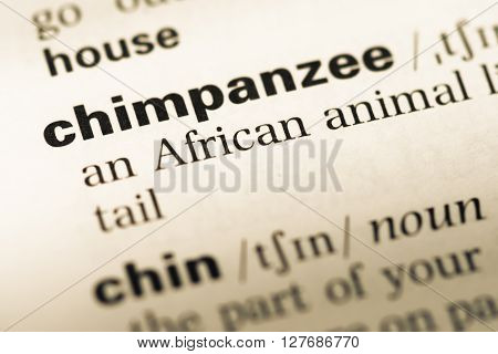 Close Up Of Old English Dictionary Page With Word Chimpanzee.