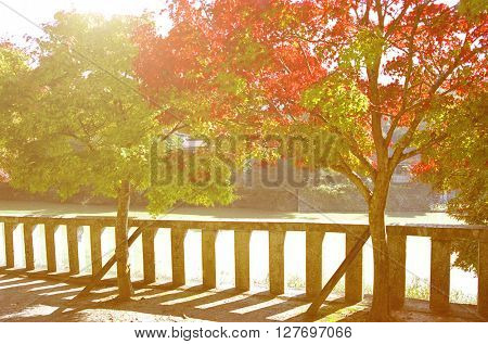 Autumn Trees in Japan Concept