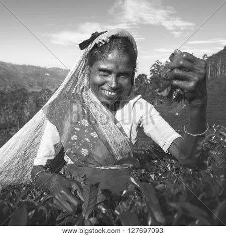 Indigenous Sri Lanka Tea Picker Character Concept