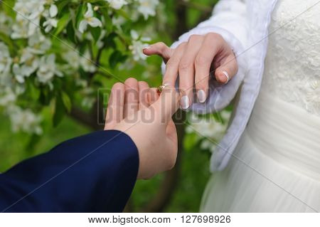 Groom and bride holds wedding ring. Wedding concept. Groom gives an engagement ring to his bride. Wedding day. Focus on hand and ring. Blossoming flowering branch on background. outdoors.