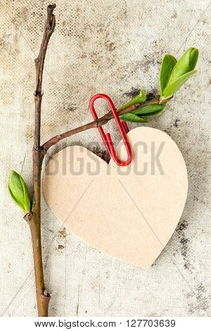 Young tree branch with paper heart shape