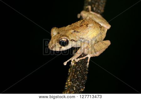 Frog Tropical Reptile Amasonia Jungles Animal