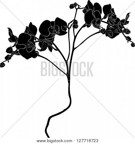 illustration with orchid silhouette isolated on white background