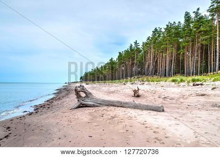 Abandoned beach of Liepaja Latvia with pinetrees