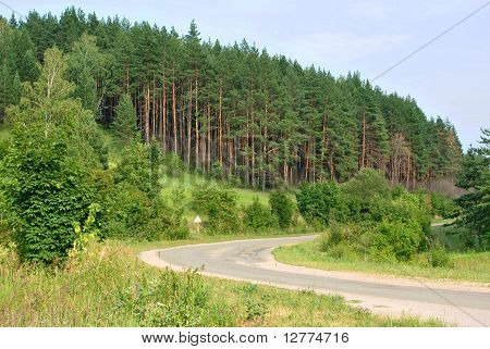 Beautiful landscape: twisting road at wood