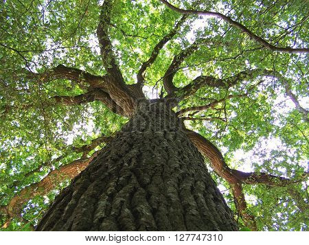close up on a tree with green foliage