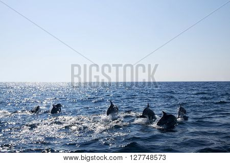Dolphins in the open sea with copy space