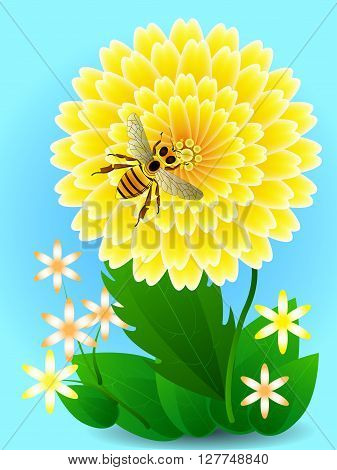 Bee On Yellow Flower Collects Honey And Pollen. Vector