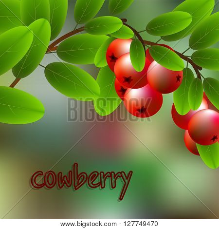 Red, Juicy, Sweet Cowberry On A Branch For Your Design. Vector