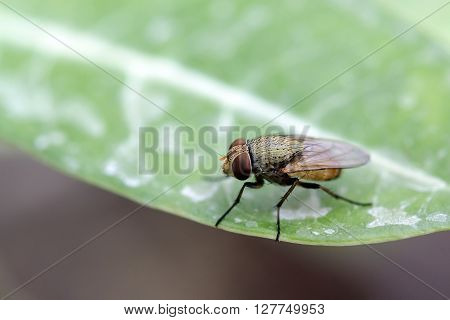 Close up fly on leaf in the garden