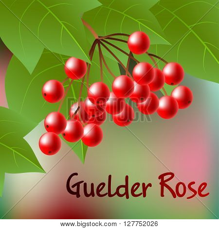 Berries Of Red Viburnum With Leaves On Abstract Backdrop. Vector