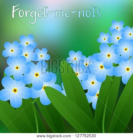 Meadow With Forget-me-nots Blooming, Blue, Beautiful. Vector
