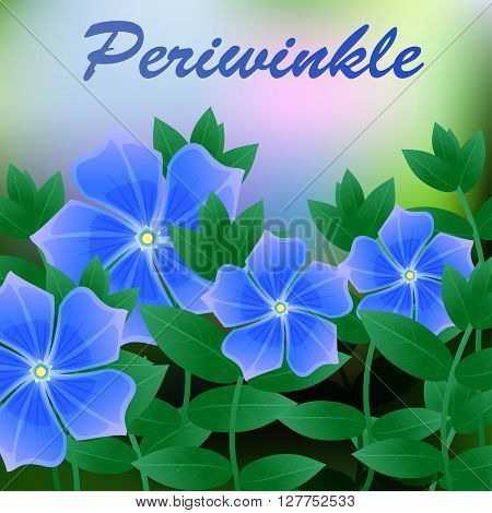 Periwinkle Spring Flower On Blue Background With Place For Text. Vector