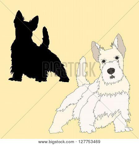 Scottish Terrier dog black silhouette realistic vector illustration