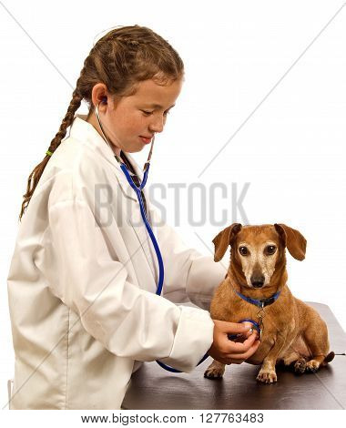 Child playing veterinarian.  Dressed in doctor's coat and stethoscope while listening to heartbeat of little dog.
