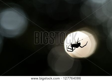 Spider silhouette on a web, profiled on bright sunset light