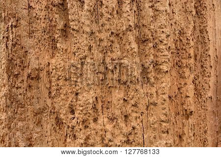 brown texture of rotten wood eaten by termites