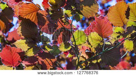 Leaves In Wonderful Morning Light