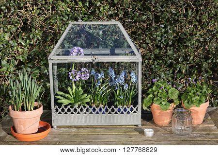 Old fashioned mini greenhouse in a garden