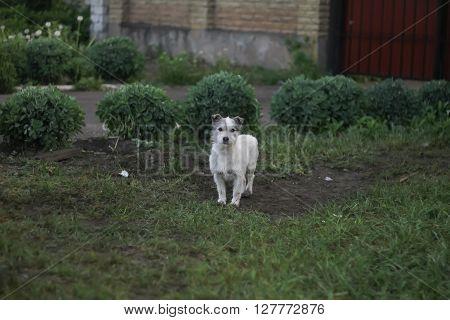 Stray dog on street at grass summer