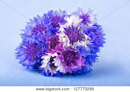 Bunch of Cornflowers in blue, purple and white on very light blue background