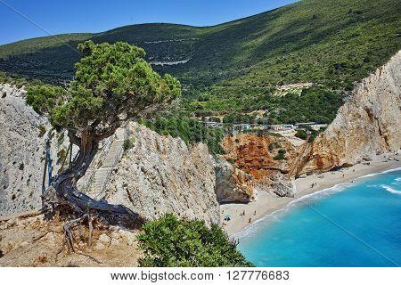 Green tree and Porto Katsiki Beach, Lefkada, Ionian Islands, Greece