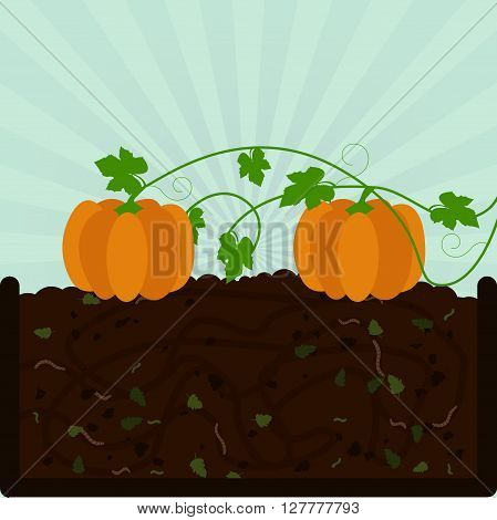 Planting Pumpkin And Compost