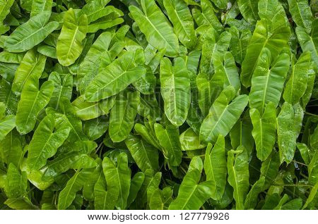 Closed-up shot of a green tropical leaves with waterdrop