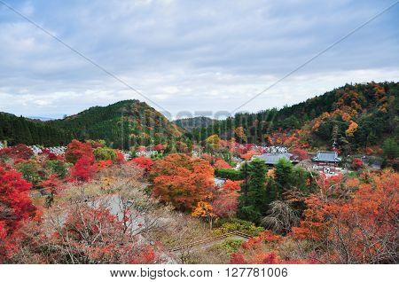 Autumn leaves from the top of Katsuoji temple Osaka Japan