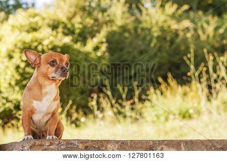 Puppy On Bricks Wall