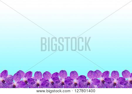 Purple Orchid flower frame on cyan background