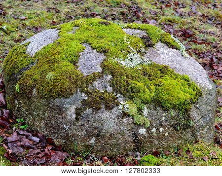 Patches of Bright Green Moss on Large Rock
