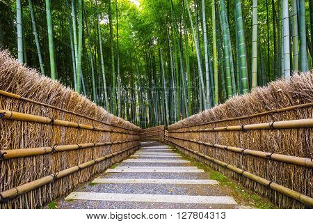 Path to bamboo forest Arashiyama Kyoto Japan