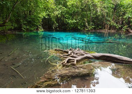 Emerald Pool in mangrove forest at Krabi in Thailand, Natural tropical landscape background