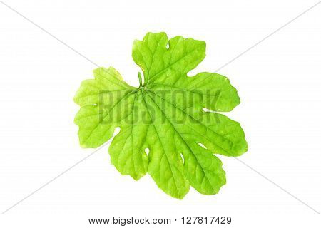 Green leaves isolated on white backgroundwith clipping path