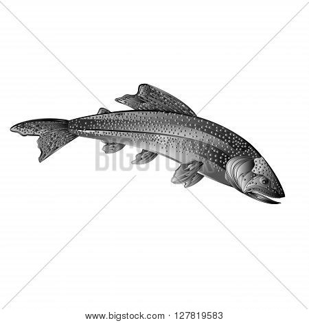 American brook trout salmon-predatory fish as wrought metal vintage vector illustration