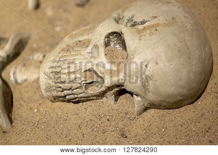 Details of the skull in the sand